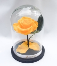 cat_preserved-rose-large